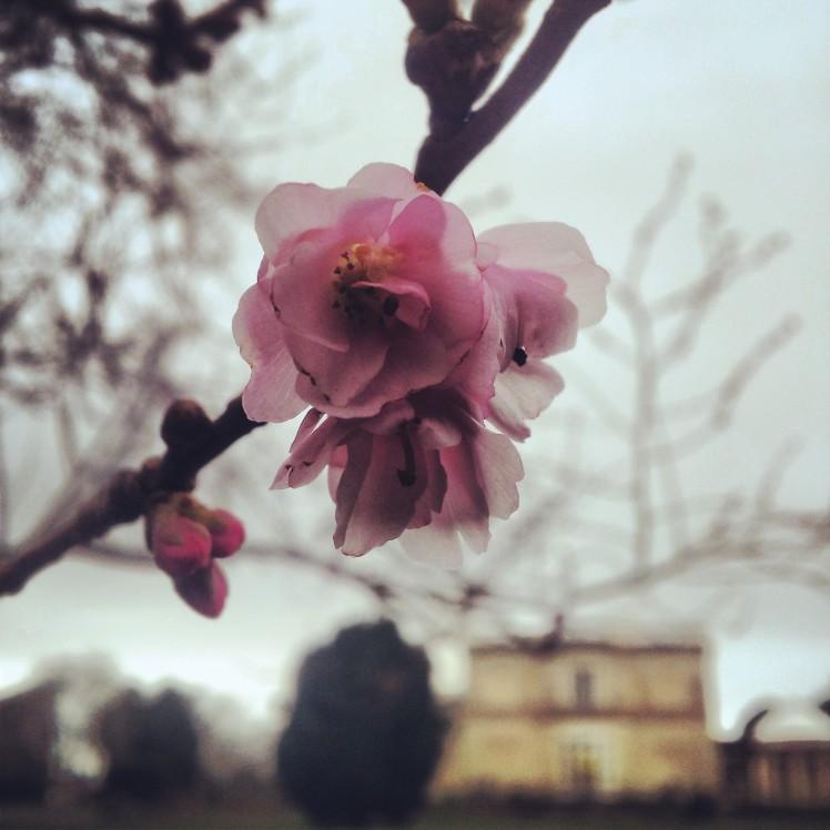 Northwood Blossom