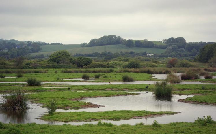 Brading Marshes.jpg