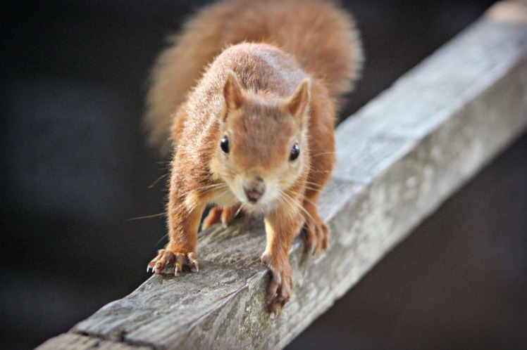 Give me nuts!