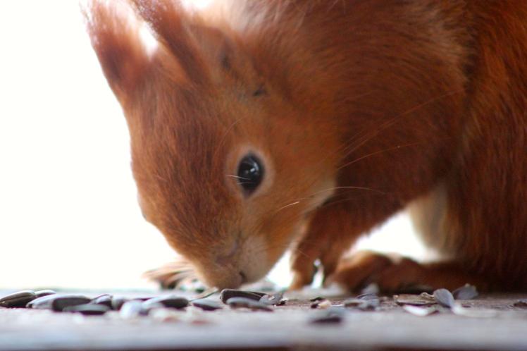 Squirrel seeking seeds