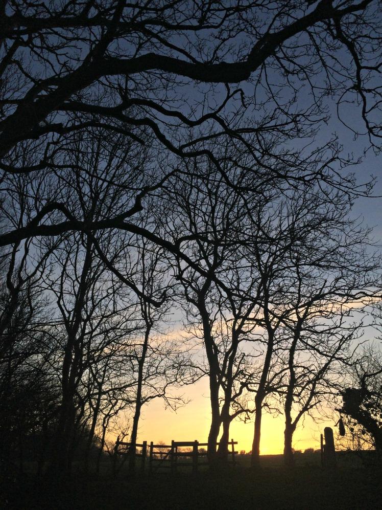 Trees & Gate