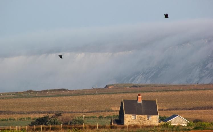 Fog shrouding the Downs